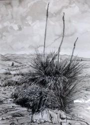 'Yakka, Flinders Range's