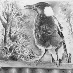 'Young Magpie' brush and ink. 20 x 15 cm