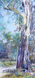 'Within Belair National Park', acrylic on canvas, 300 mm x 100 mm, SOLD