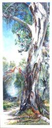 Tree Life, Belair